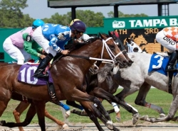 Tampa Bay Derby