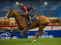 Bet on The E.P. Taylor Stakes