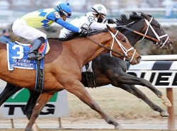 Withers Stakes